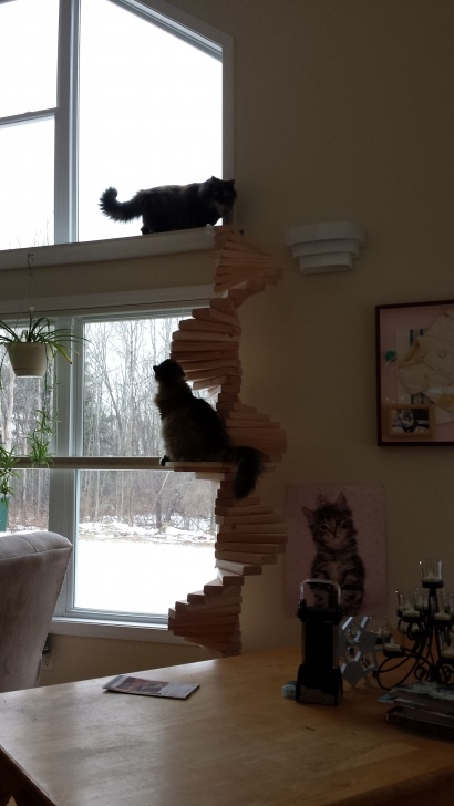 Awesome Cat Spiral Staircase Image 045