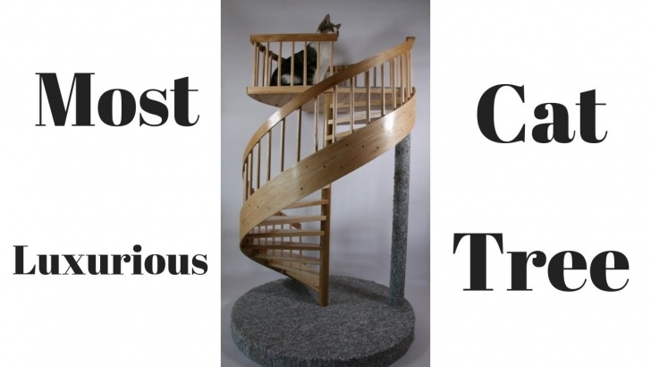 Gorgeous Cat Spiral Staircase Picture 952