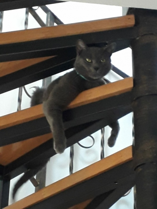 Most Creative Cat Spiral Staircase Picture 353