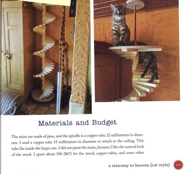 Splendid Cat Spiral Staircase Image 965
