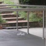 Popular Steel Balustrades And Handrails Image 951